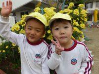 241109南陽幼稚園園庭の菊の花