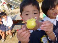 241120南陽幼稚園焼き芋