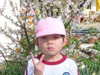 250322南陽幼稚園花