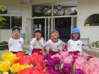 250409南陽幼稚園チューリップ
