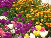 250416南陽幼稚園春の花々